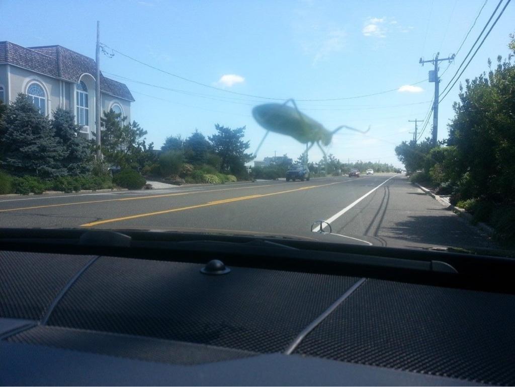bug-attack
