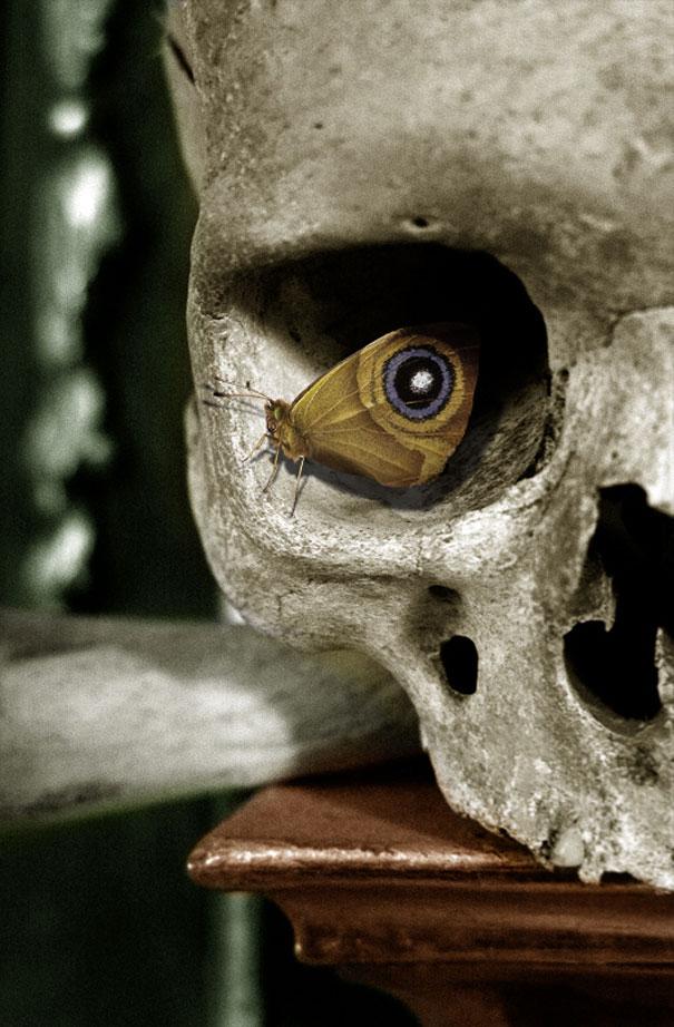 skull-butterfly