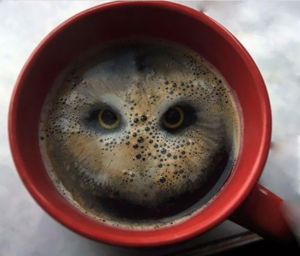 owl in coffee optical illusion